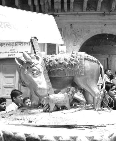 heilige kuh holy cow vrindhavan ayurveda ghee copyright by julia wunderlich