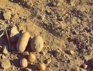 kartoffelernte kartoffelacker ayurveda-ernaehrung ayurveda-kartoffeln makro-kosmos naehrung nourishmanet rolling-tiger copyright by julia-wunderlich